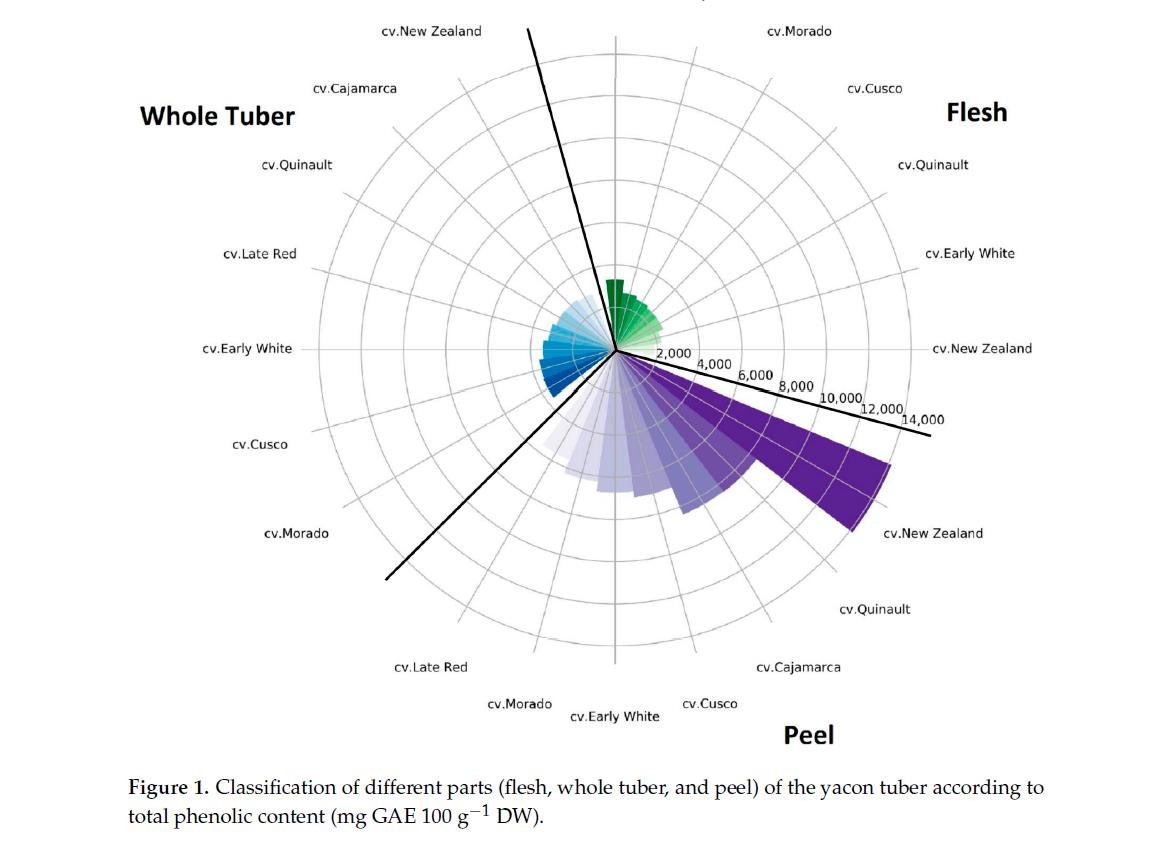 Classification of Different Parts of the Yacon Tuber According to Total Phenolic Content