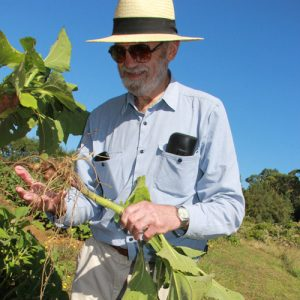 Dr Robert Welch in Kerikeri Yacon Growing Field