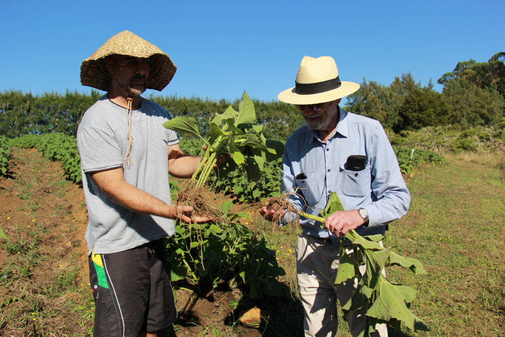 Dr Robert Welch in the field with Yacon Grower Marcus
