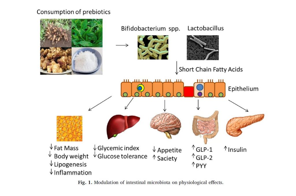 Fig 1 Modulation of Intestinal Microbiota on Physiological Effects